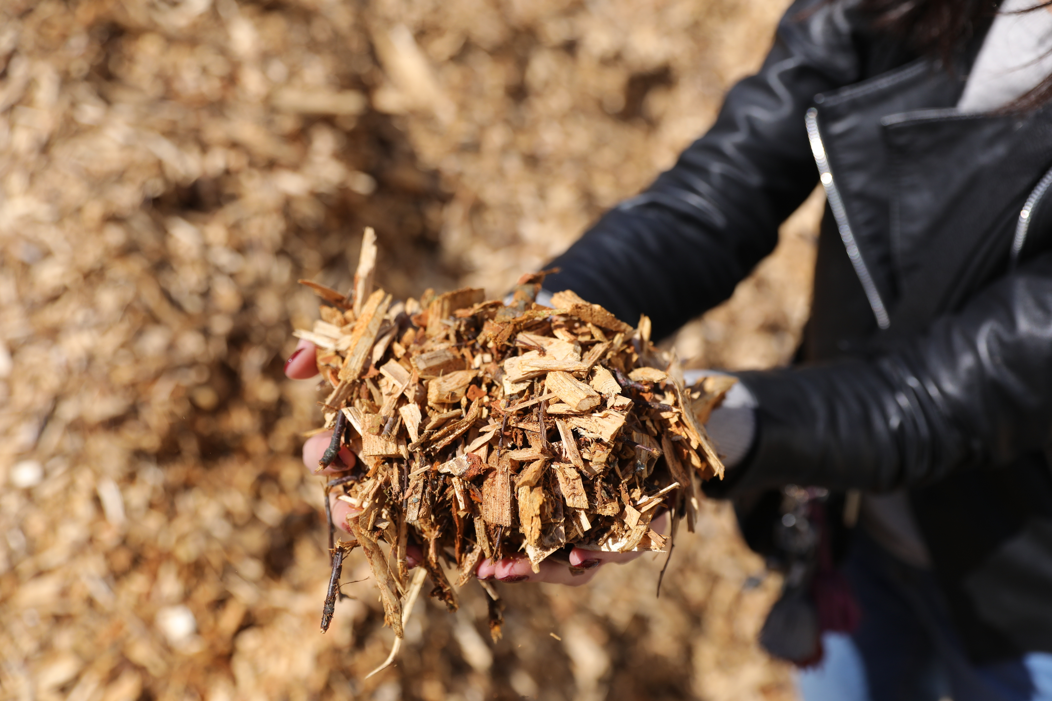 Biomass exchange overview – August 2020
