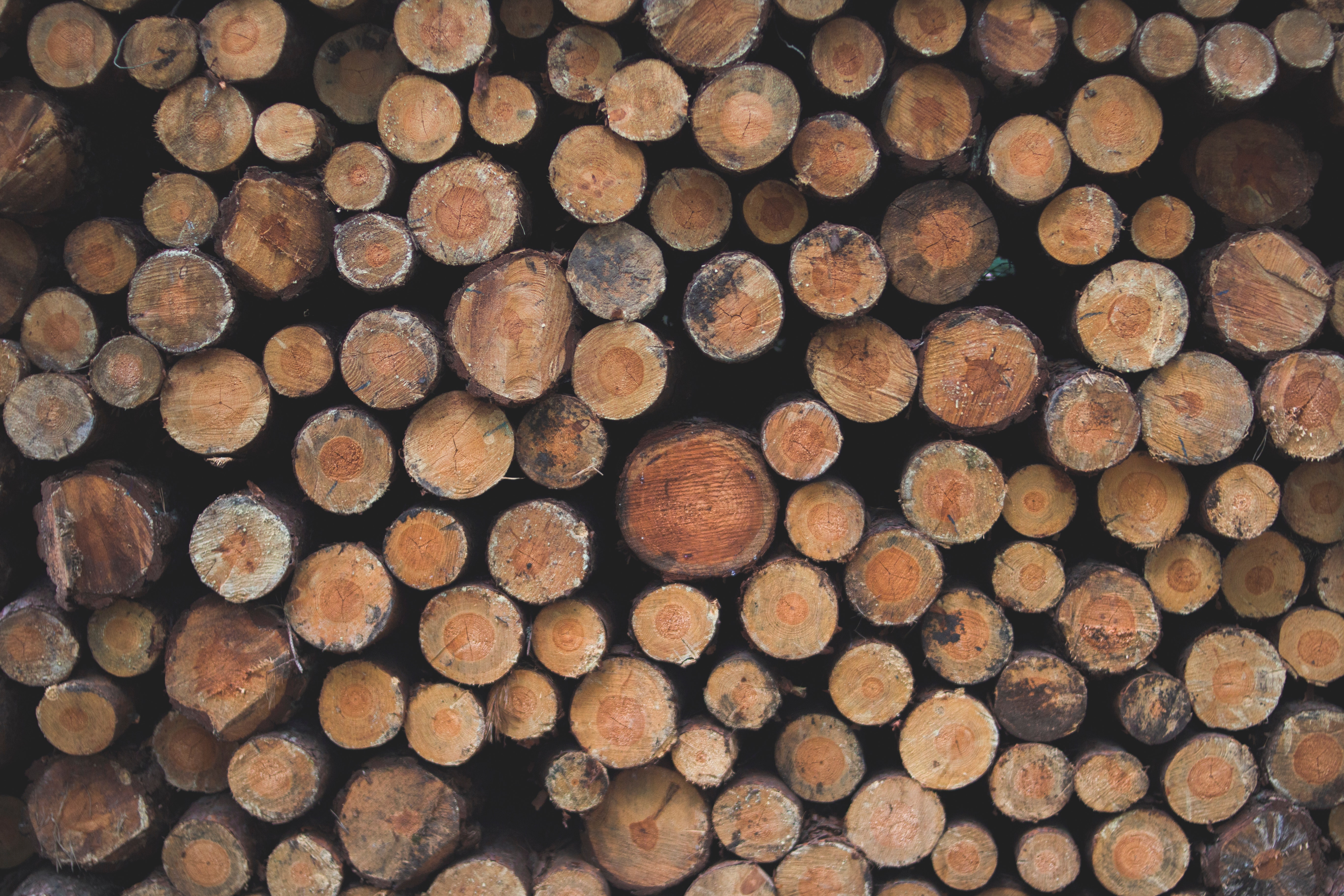 Timber Exchange Trade Overview – September 2020
