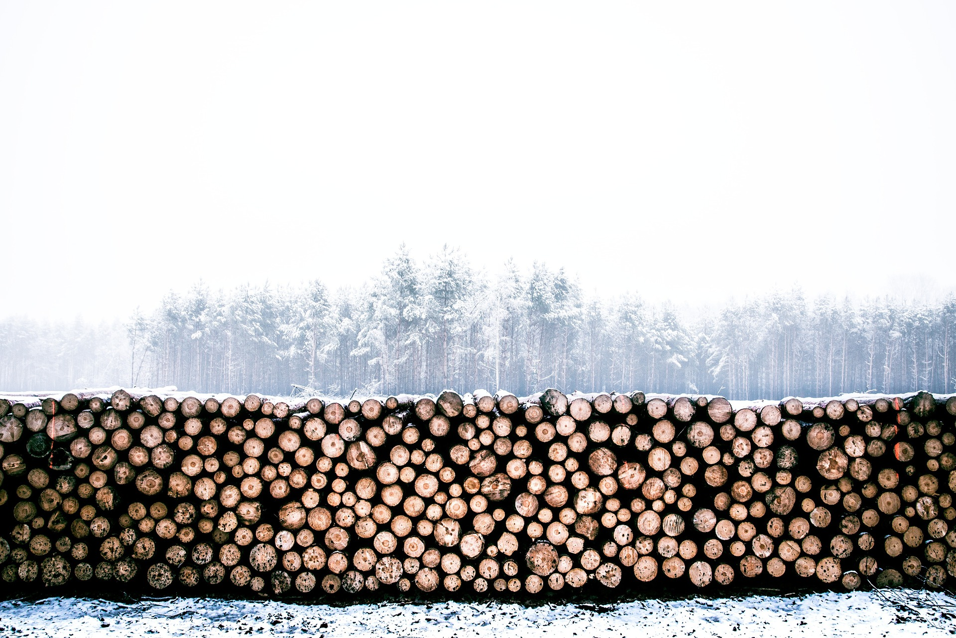 Timber Exchange Trade Overview – November 2020