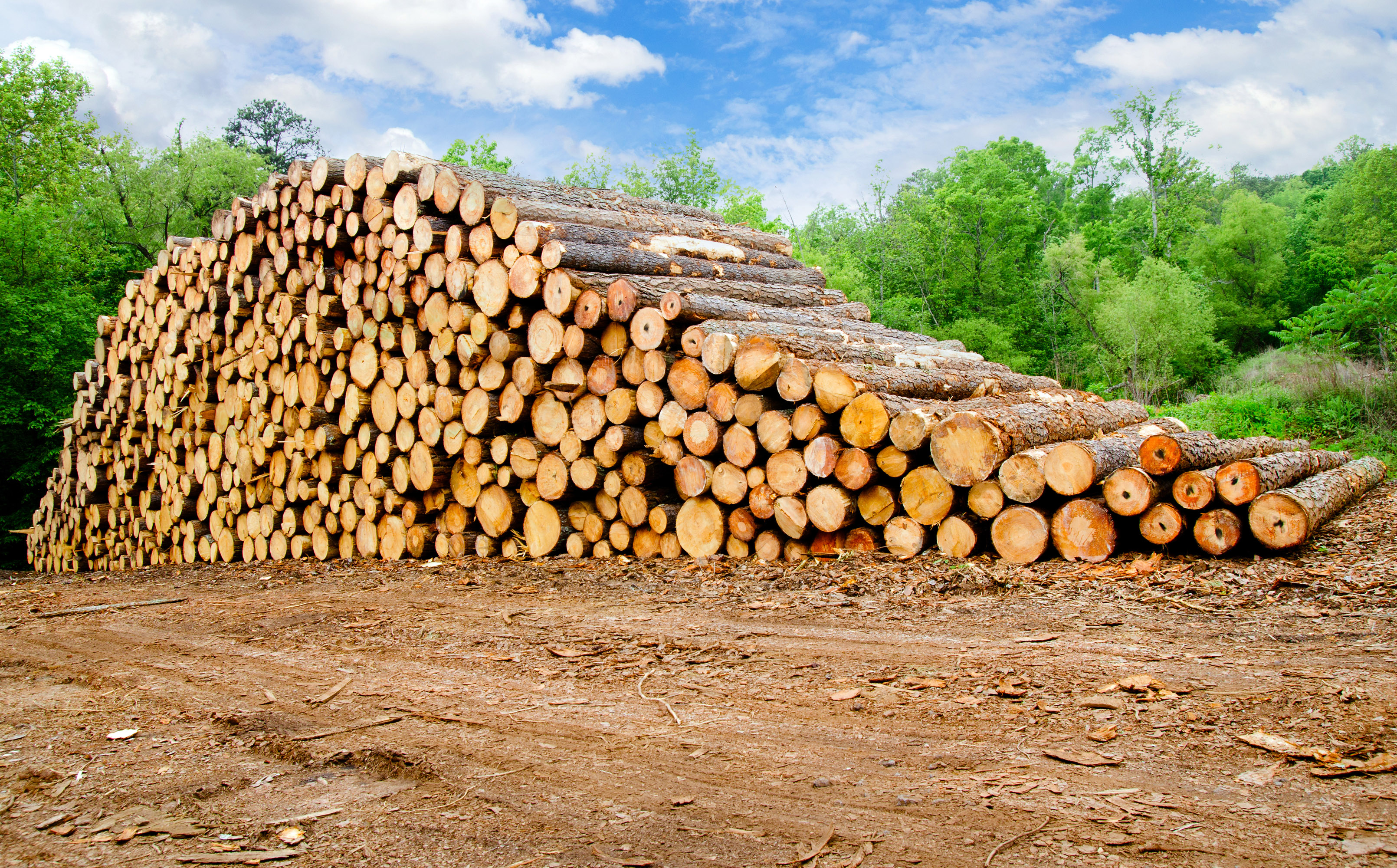 Timber Exchange Trade Overview September of 2021